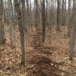 Chelsea trails